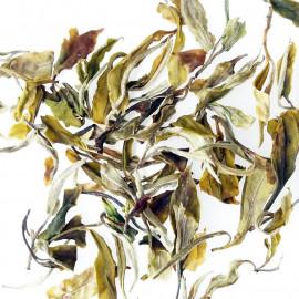 Tè Bianco Bai Mu Dan Guangxi Special