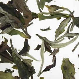 "Tè Bianco ""Yunnan White Forest Puerh"""